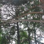 Кольцовские дети получили травмы на самодельном аттракционе