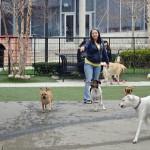 В Кольцово площадка для выгула собак появится в новом парке