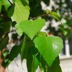 Совет ветеранов Кольцово «взял шефство» над лесом позади Древа жизни