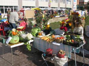 Кольцовские дачники снова представят на обозрение настоящие чудеса огородничества.