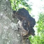 Ученые наукограда Кольцово определили грибы с противовирусным эффектом