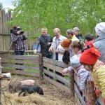 В кольцовский «Теремок» приехали нутрия, лис, ослик и другие жильцы