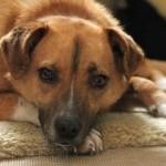 Волонтеры из Кольцово призывают помочь приюту для собак