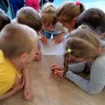 Кольцовская ДШИ, «Созвездие» и «Факел»: родители и дети могут поставить оценку