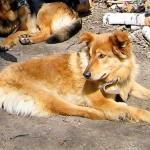 В Кольцово собрали средства для травмированных животных