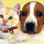 Завтра в Кольцово состоится благотворительная акция в пользу бездомных животных