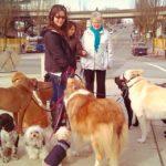 Собака без поводка на улицах Кольцово: что противопоставить агрессии?