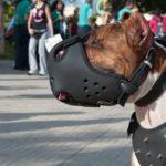 Происшествие с агрессивной  собакой  в наукограде взято под особый контроль