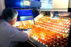 Сортировка яйца.