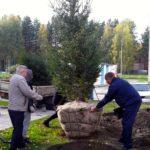 Один из дворов в Кольцово получил в подарок елки